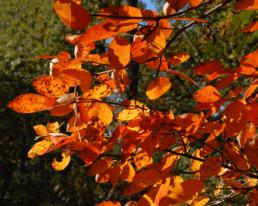 Por que as folhas mudam de cor no outono?