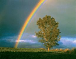 As chuvas de março trazem... Arco-íris?