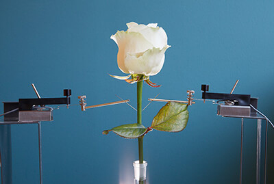 Color-Changing Cyborg Flower Turns Over New Leaf For Bionic Technology