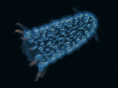 Living Light: Is There a Future For Bioluminescence Technology?