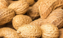 Pulse Light Research Helps Create Hypoallergenic Peanuts