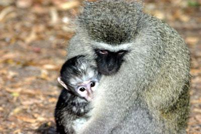 Colorblind Monkeys