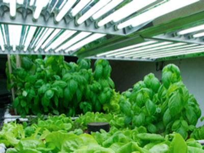 The Growing Grow Light Market