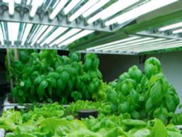 El Crecimiento Del Mercado de Iluminación Para Plantas