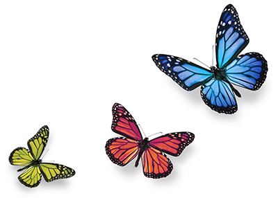Where Do Butterflies Get Their Color?