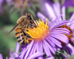 Por que as flores têm cor – Uma história de sobrevivência
